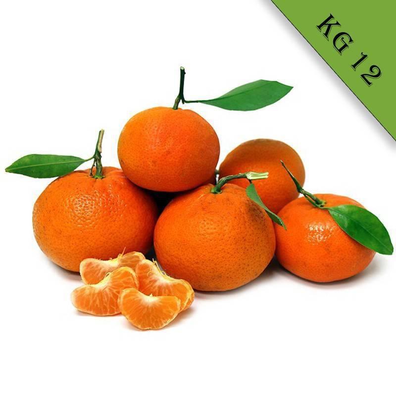 Clementine biologiche kg 12