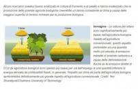 Agricoltura convenzionale e biologica: quali sono le differenze?