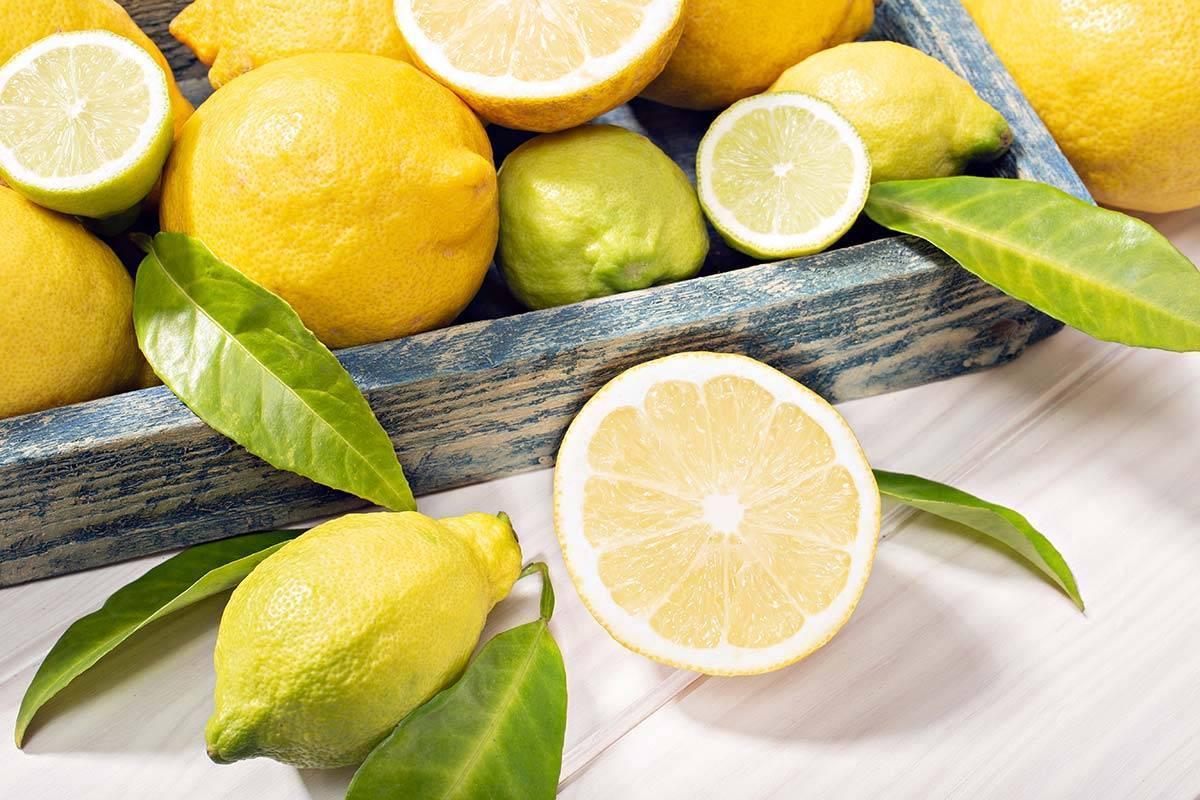 Limoni Siciliani | Eccellenza Italiana